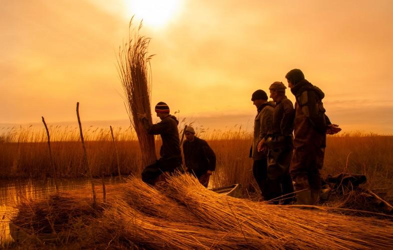 Kızılırmak Deltası ve Saz Kesimcileri